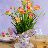 Fragrant Freesia in Wrap